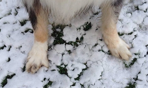 Frosty Feet & Keeping Your Dogs Safe in the Winter