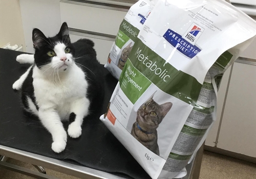 Meet our Cat Pet Slimmer Winner