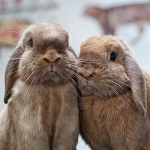 Rabbit Awareness Week - A Focus on Diet