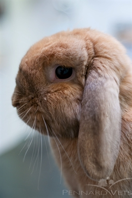 Rabbit Awareness Week - Companionship